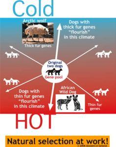 cold-hot-dog-fur.jpg