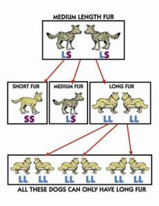 Fig 2: dog-fur.jpg